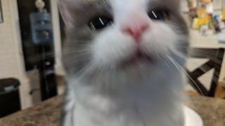 Download Kitten Close Up 2017-11-27 Video