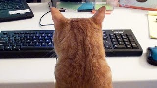 Download What it's like to Work with Cats! Video