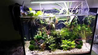 Download Jak zwiększyć optycznie akwarium. Aranżacja małego zbiornika. Video
