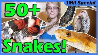 Download Reptile Room Tour 2019!! Meet My Pets! Video