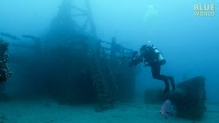 Download Artificial Reefs | JONATHAN BIRD'S BLUE WORLD Video