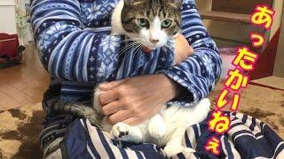 Download 寒い朝は猫を抱こうよ😺【猫日記こむぎ&だいず】2016.11.29 Video