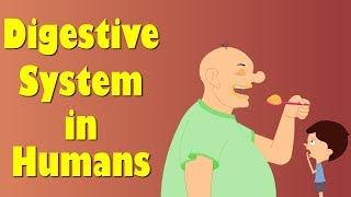 Download Digestive System of Human Body | It's AumSum Time Video