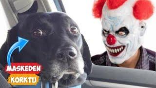 Download Maskeden Korkan Köpekler! | [2018 Derleme] ● Eğlenceli Anlar Video