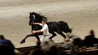 Download Overall CHAMPION 2018!! Friesian horse Jurre 495, faderpaard Hengstenkeuring. Video