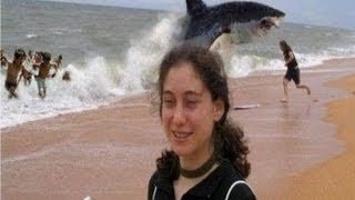 Download Top 5 Shark Attack Beaches Video