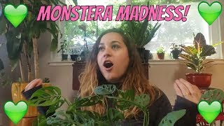 Download Mystery Monstera! + My Favorite Houseplant! Video