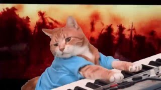 Download Keyboard Cat Awakens The Force Video