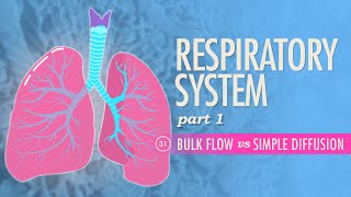Download Respiratory System, Part 1: Crash Course A&P #31 Video