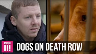 Download Professor Green | The Dogs On Death Row Video