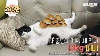 Download 하다하다 이제 고양이가 다이어트 자극함 Video