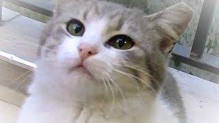 Download 名前を読んだら走って甘えに来る猫 猛ダッシュもありで癒されますよ Video