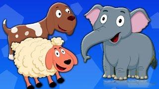 Download животных Звуковая песня | Детские рифмы | узнать животных | Rhyme For Kids | Animal Sound Song Video