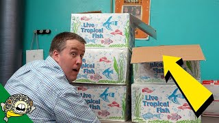 Download Dang, THOSE came in big. Tropical Fish Unboxing Video