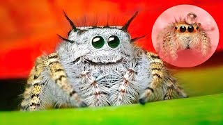 Download THE CUTEST SPIDERS In The World Video