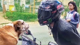 Download FUNNY, CRAZY & WEIRD THINGS BIKERS SEE, SAY & DO! Video