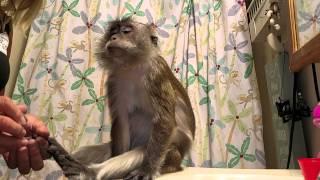 Download Monkey Medi Pedi Video