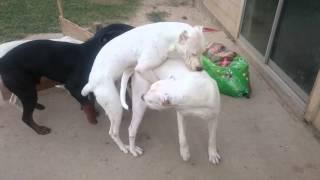 Download Female dog in Heat!!! Video