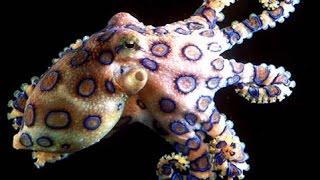 Download Octopus: Beautiful Ocean Creatures - Nature Documentary Video