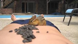 Download Turning Chipmunks into Pets Video