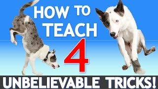 Download How to Teach 4 UNBELIEVABLE Tricks! Featuring America's Got Talent Star Sara Carson! Video