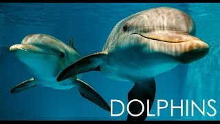 Download 🐬 Dolphins at Clearwater Marine Aquarium Winter & Hope, from Dolphin Tale 2017 Video