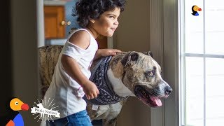 Download Pit Bull Dog Has Loved His Little Sister Since Before She Was Born - EROS | The Dodo Pittie Nation Video