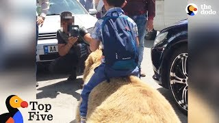 Download Bear Chained For Selfies Finally Runs Free + Animals Freedom Stories | The Dodo Top 5 Video