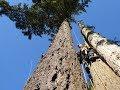 Download Spur Climbing Video