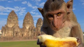 Download Monkey Buffet Festival - Amazing Places Video