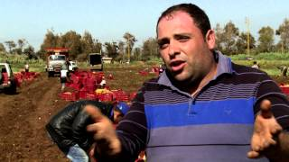 Download ILO helps Lebanese farming communities hosting Syrian refugees Video