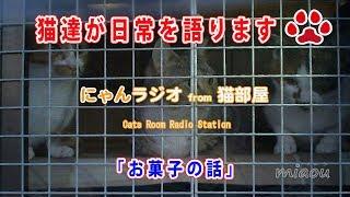 Download 【にゃんラジオ】 しぴとまや お菓子の話 【瀬戸の猫部屋放送局】 Video