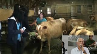 Download GAUSHALA गऊशाला Cow Feeding in CANADA,by Vancouver Sewa Team,& bhajan sung by Satpal Sharma. Video