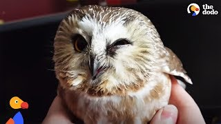 Download Stunned Owl Flies Into Window and Thanks Family Who Rescues Him | The Dodo Video