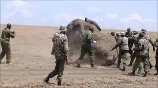 Download Elephant Video