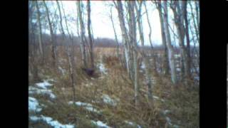Download Trail cam in front of a power snare Video