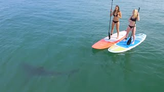 Download Great White Sharks Give Bikini-Clad Paddleboarders Scare of Their Lives Video