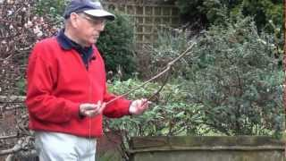 Download John Baker - Professional Dowser Video