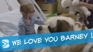 Download BARNEY a Therapy Dog in a Children's Hospital Video