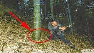 Download 编竹匠偶遇百年竹王,心地善良没有砍伐,饥荒那年竟是竹子报恩度过 Video