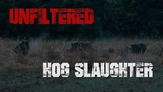 Download Unfiltered Hog Slaughter Video