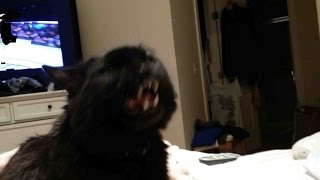 Download Cat Attacks Groomer Must See Video