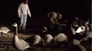 Download Goose Hunt ND (Early Season) 75 birds Video