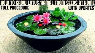 Download How to Grow Lotus Plant at Home With Updates( FAST N EASY METHOD) Video