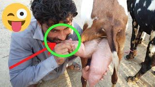 Download Bacche bakriyon ke bacche 📲 بکریوں کے ریٹ والی ویڈیو ok bacchon wali bakriyan Video