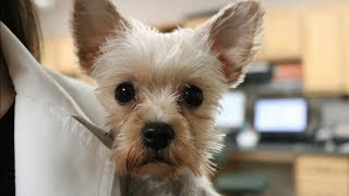Download Truth About Working In Veterinary Medicine   Veterinary Vlog#7 Video