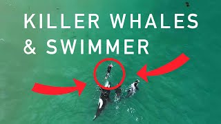 Download Orcas playing with swimmer at Hahei Beach, New Zealand (Original) Video