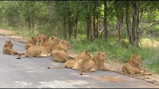 Download South Africa Krugerpark incl. The Big Five Video