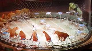 Download Ringling Bros.Tigers and Lions Video