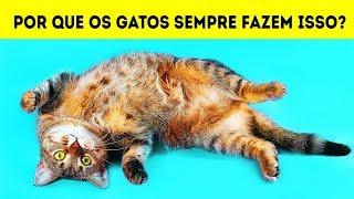Download Por que Gatos Deitam de Costas Quando Veem Você Video